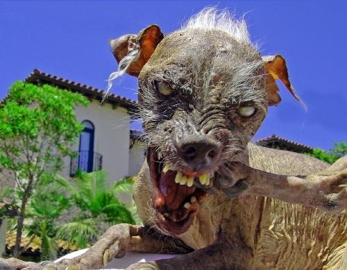 Cruz-ugly-dog